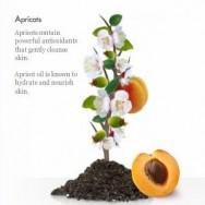 St. Ives Apricot Scrub